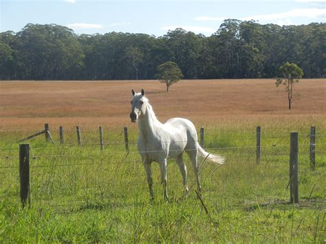 horses hindgut hygain acidosis horse feed