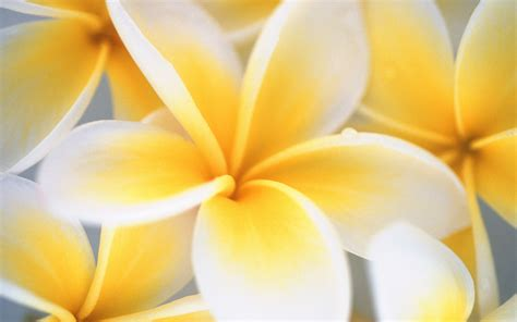 Yellow And White Flowers Wallpaper  1920x1200  #23775