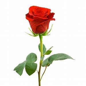 Buy and send Single Red Rose Long stem to Uganda Kampala