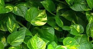Pflanze Für Dunkle Räume : pflanzen f r dunkle r ume vivanno ~ A.2002-acura-tl-radio.info Haus und Dekorationen