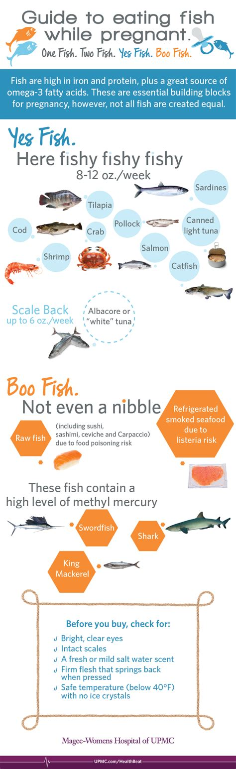 infographic eating seafood  pregnancy upmc