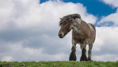 Horse Gdefon Draft Wallpapers Reddit St Animal