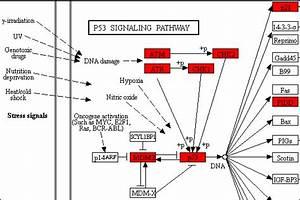 Shinygo V0 61  Gene Ontology Enrichment Analysis   More