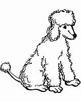 Poodle Coloring Pages Printable Poodles Standard Chow Toy Sheets Colouring Drawn Nova Puppy Getcolorings Novas Clip Library Clipart sketch template