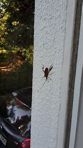 Großer Schwarzer Käfer Bilder : wer kennt diesen k fer s bild insekten ~ Frokenaadalensverden.com Haus und Dekorationen