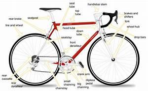 Road Biking 101  A Beginner U0026 39 S Guide