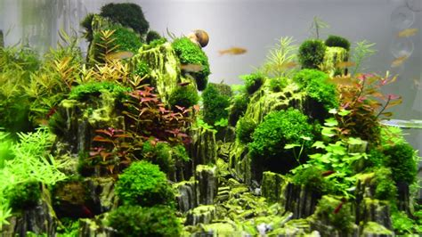 Aquascape Planted Aquarium With Glimmer Wood Rock (day 14