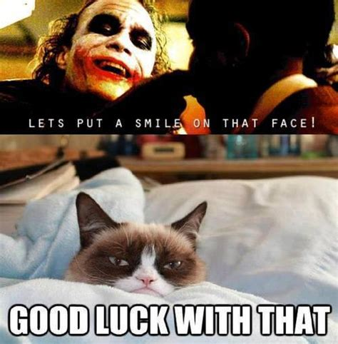 New Cat Meme - 13 new grumpy cat memes