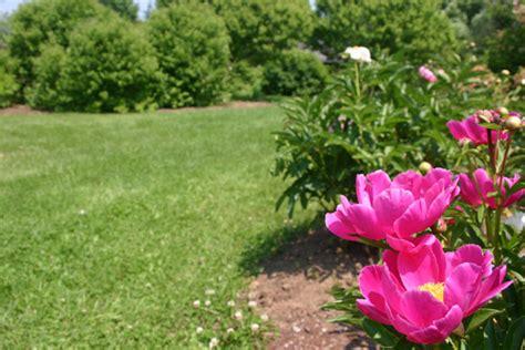 file littlefield garden flower jpg wikimedia commons