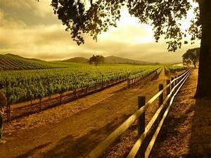 Top Ten Sta. Rita Hills Wineries