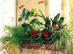 Pflege Von Zimmerpflanzen : licht pflege von zimmerpflanzen zimmerpflanzen zimmer und gartenblumen ~ Markanthonyermac.com Haus und Dekorationen