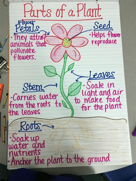 creative ways  teach plant life cycle weareteachers