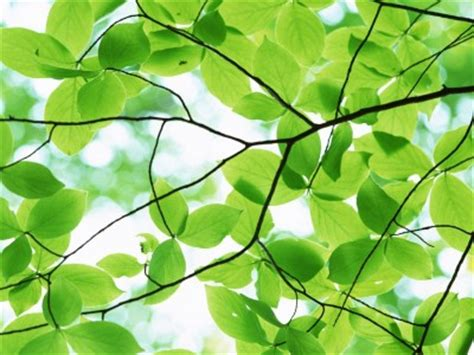 bark   tree pleasant green leaves   backgrounds