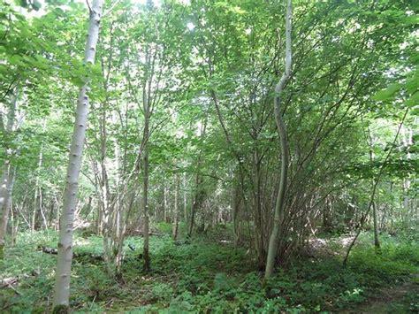parcelle de bois a vendre vente terrain ticheville a vendre ticheville parcelle de bois