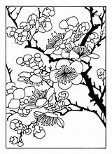 Cherry Blossom Coloring Pages Tree Clipart Patterns Designs sketch template