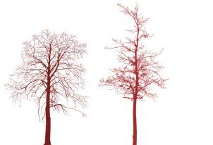 hi res trees photoshop brushes by cyberxtremer on deviantart