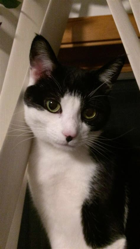 cats cat nosy tuxedo named kitty spirit