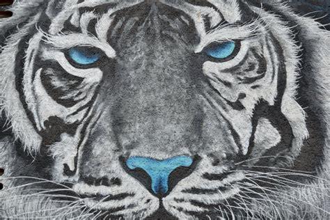 รูปภาพฟรี: กราฟฟิตี, เสือ, ผีเสื้อเสือ, ตกแต่ง, แมว, ใบหน้า, สัตว์, หัว, ศิลปะ, นักล่า