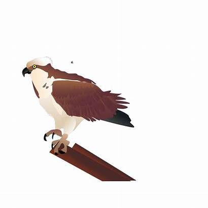 Osprey Branch Standing Icon Svg Clip Clipart