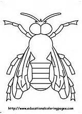 Coloring Pages Insects Millipede Insect sketch template