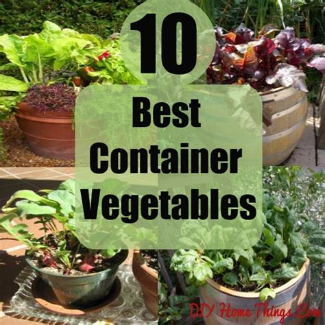 container vegetable gardening 2017 2018 best cars reviews