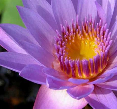 flor linda fotos dicas imagens flores lindas maravilhosas