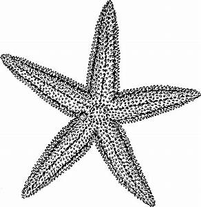 Blue Starfish Drawing | Clipart Panda - Free Clipart Images