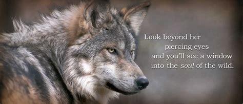 endangered wolf center