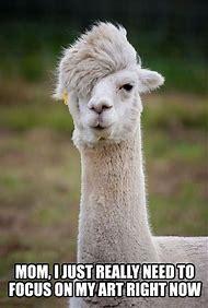 Llama Funny Animal Memes