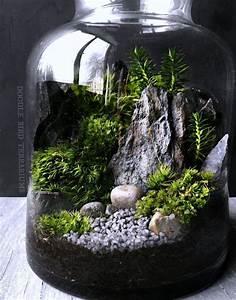 Die besten 25 bonsai wald ideen auf pinterest indoor for Garten planen mit bonsai im terrarium