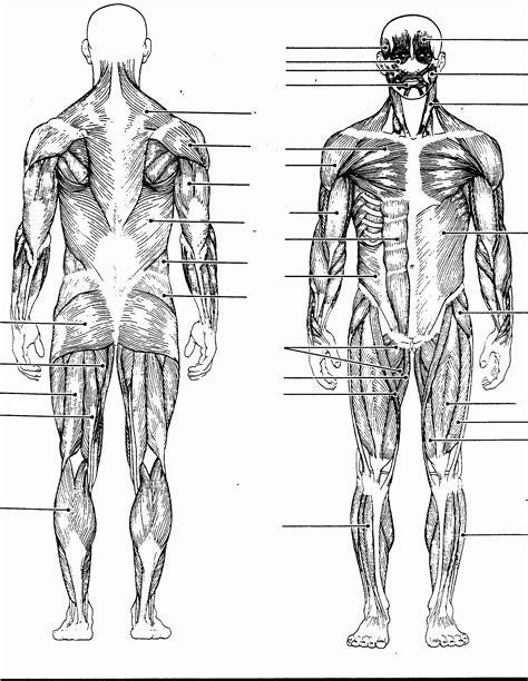 Blank Muscle Chart  Anatomy Organ