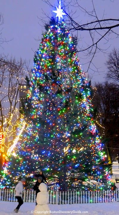discovery christmas tree boston tree lighting events schedule 2018 boston discovery guide