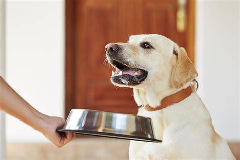 Feeding your older pet for optimum health - PetMeds® Pet ...