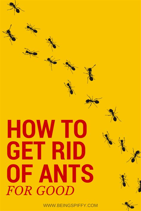best way to get rid of ants getting rid of ants being spiffy