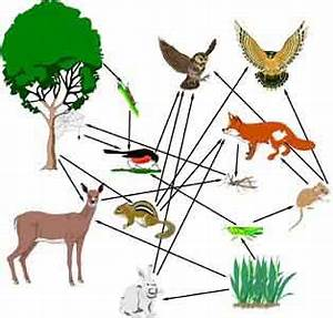 Research Page | Food Webs 4 Kids