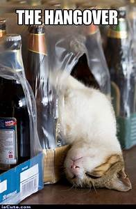 The Hangover - Cat Edition @ isCute.com