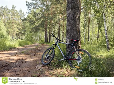 Bike In Forest Side View Stock Photo