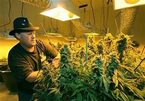 how many states have legalized marijuana now