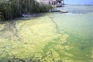Algen Im Teich Entfernen : 114 algen im teich algen im teich was nun algen im teich bek mpfen algenbek mpfung youtube ~ Orissabook.com Haus und Dekorationen