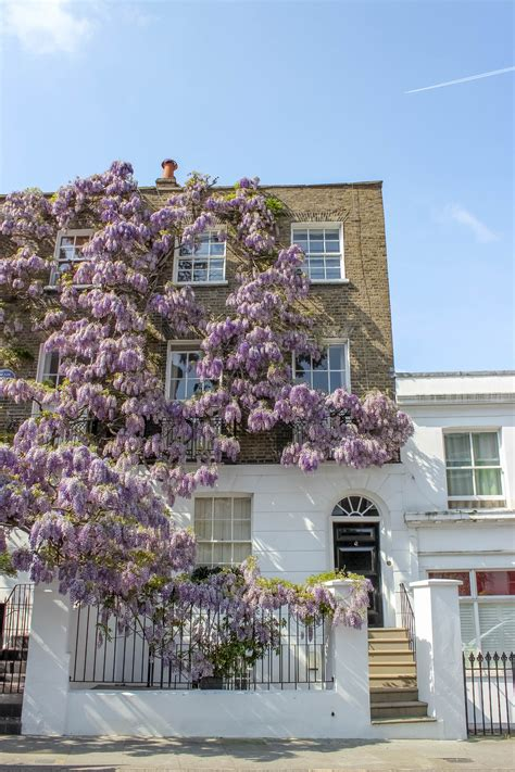 Notting Hill Guide London's Most Charming Area Compass