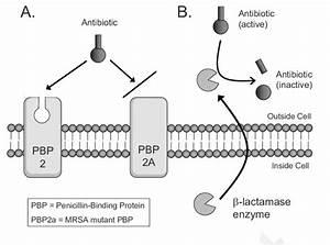 Diagram Of The Two Principal Antibiotic Resistance