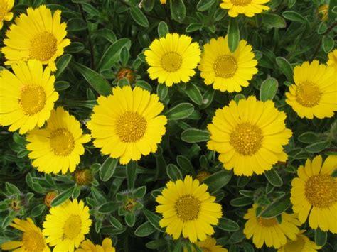 Pflanzen Für Die Sonne by Blumen F 252 R Die Sonne W 228 Hlen Tipps F 252 R 12 H 252 Bsche Exemplare