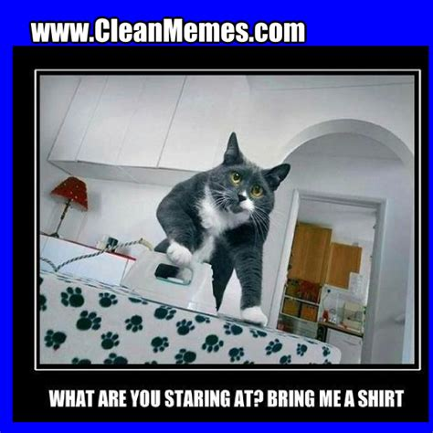 Funny Cat Memes Clean - clean cat memes www imgkid com the image kid has it