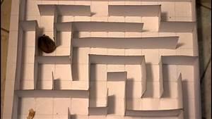 hamster through the maze