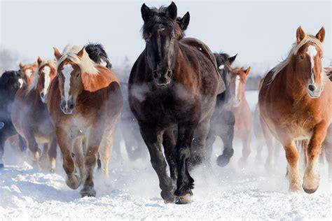 natuerliche haltung pferdehusten
