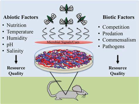 insects  full text abiotic  biotic factors