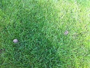 Moos Im Rasen Beseitigen : pilze im garten beseitigen ~ Lizthompson.info Haus und Dekorationen