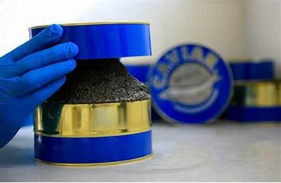 Caviar Aquitaine Boite Exception Produit Terroir Evasion