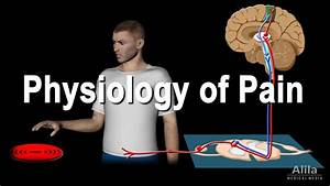 Physiology Of Pain  Animation