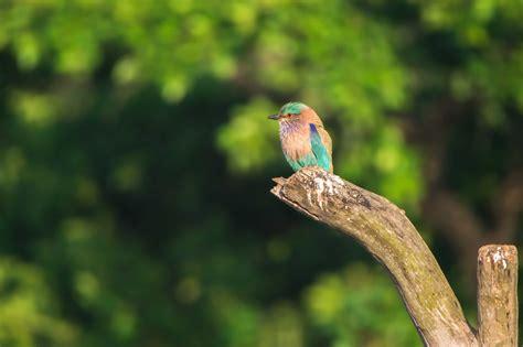 bird photography contest top  photographs